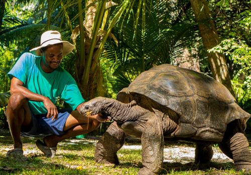 Conservation-Tortoise