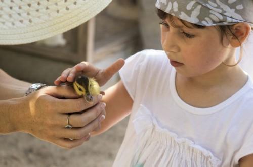 Children Duckling