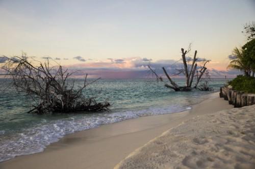 Driftwood Beach Dusk