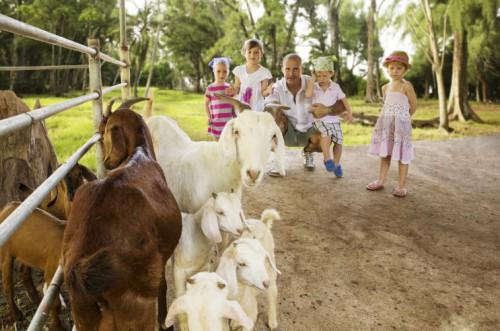 Family + Goats