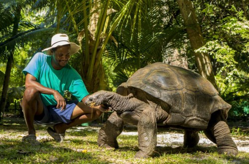 Giant Tortoise & Env Officer