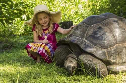 Girl + Tortoise