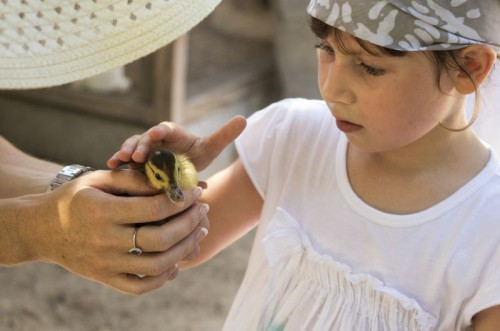 Girl patting duckling