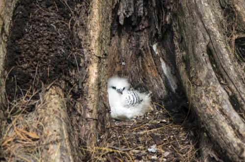 Nature Bird Nesting