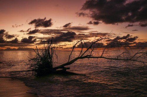 Sunset Driftwood